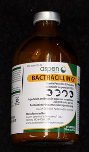 bactracillin g penicllin injectable @ sunsetfeed.com