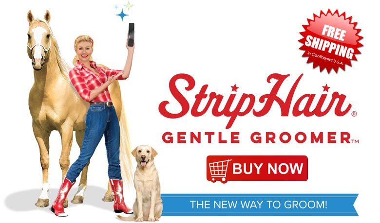 strip-hair-gentle-groomer-at-sunset-feed-miami