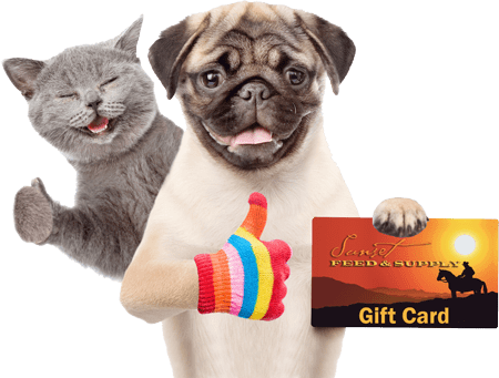 cat-and-dog-holding-sunset-feed-gift-card