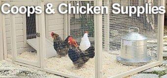 Chicken Feed, Coops & Breeding Supplies