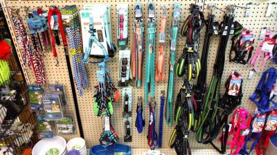 Leather, Nylon & Chain Dog Collars & Leashes
