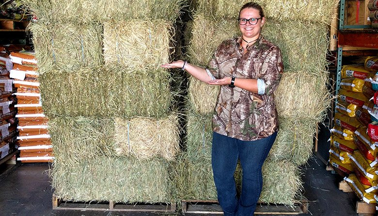 hay-at-sunset-feed-miami
