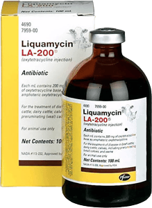 liquamycin-la-200-antibiotic-at-sunset-feed-miami