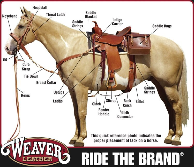 Weaver Tack Supplies @ Sunset Feed Miami
