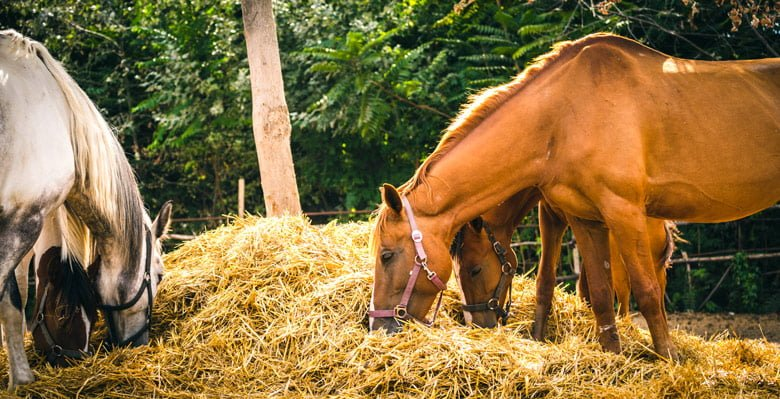 Horse Feed & Hay @ Sunset Feed Miami