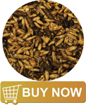 Buy Excel Equine EPN Classic Horse Feed @ Sunset Feed Miami