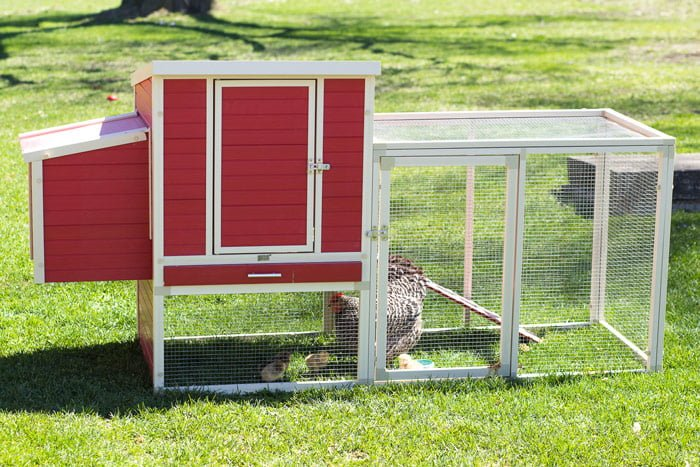 new-age-pet-ecoFLEX-Sonoma-Chicken-Coop-@-sunset-feed-miami