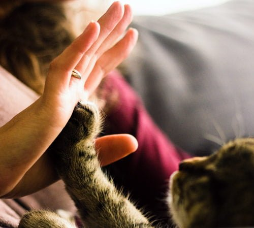 high fiving a kitty