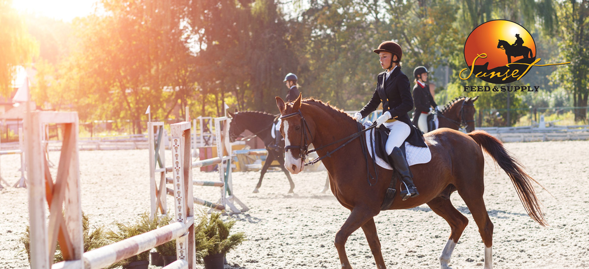 English Riding Gear & Apparel