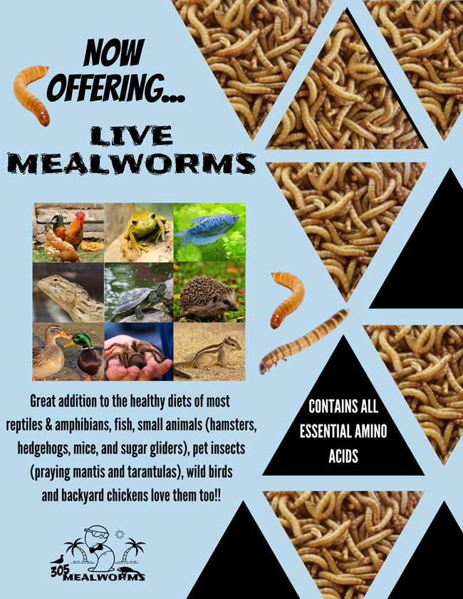 305MealWorms-@-Sunset-Feed-Miami