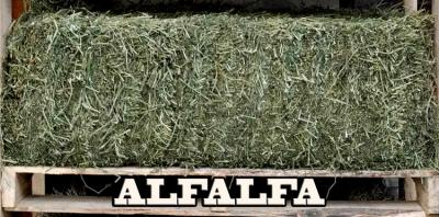 alfalfa hay @ sunset feed miami
