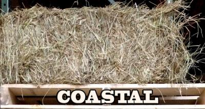 coast hay @ sunset feed miami